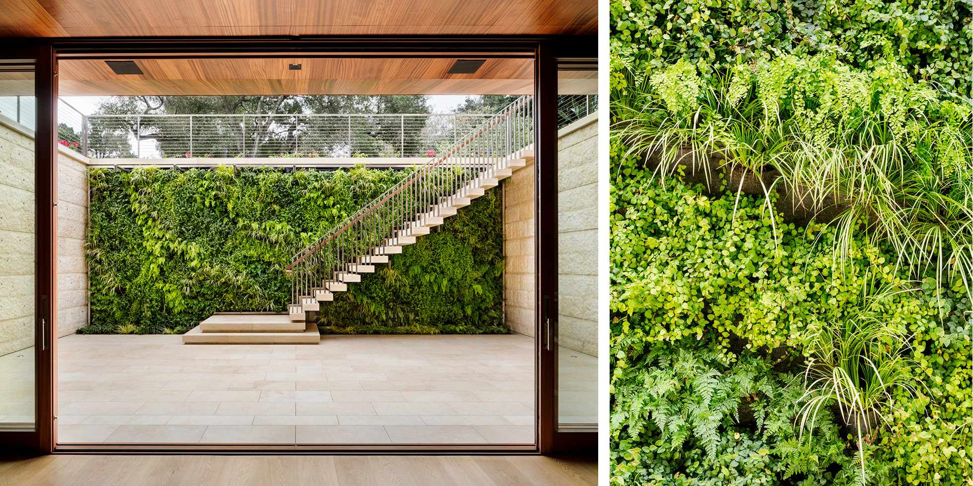 Atherton Residence Living Wall by Habitat Horticulture - View 4