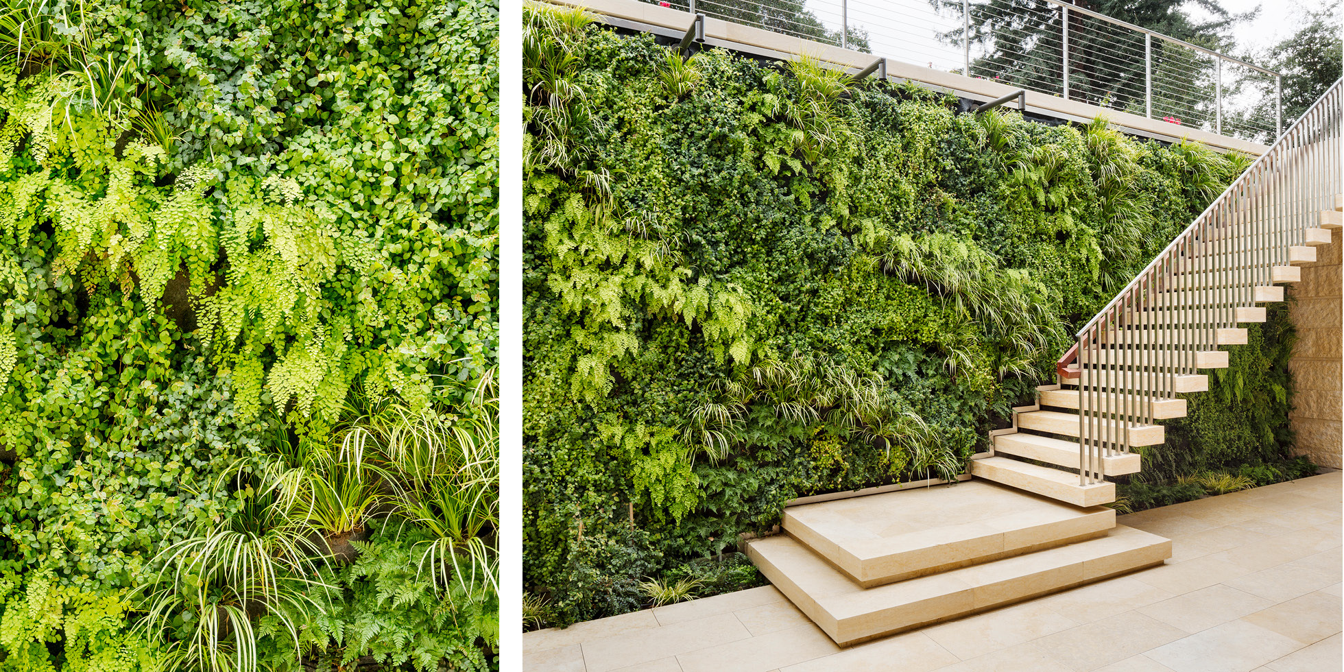 Atherton Residence Living Wall by Habitat Horticulture - View 2