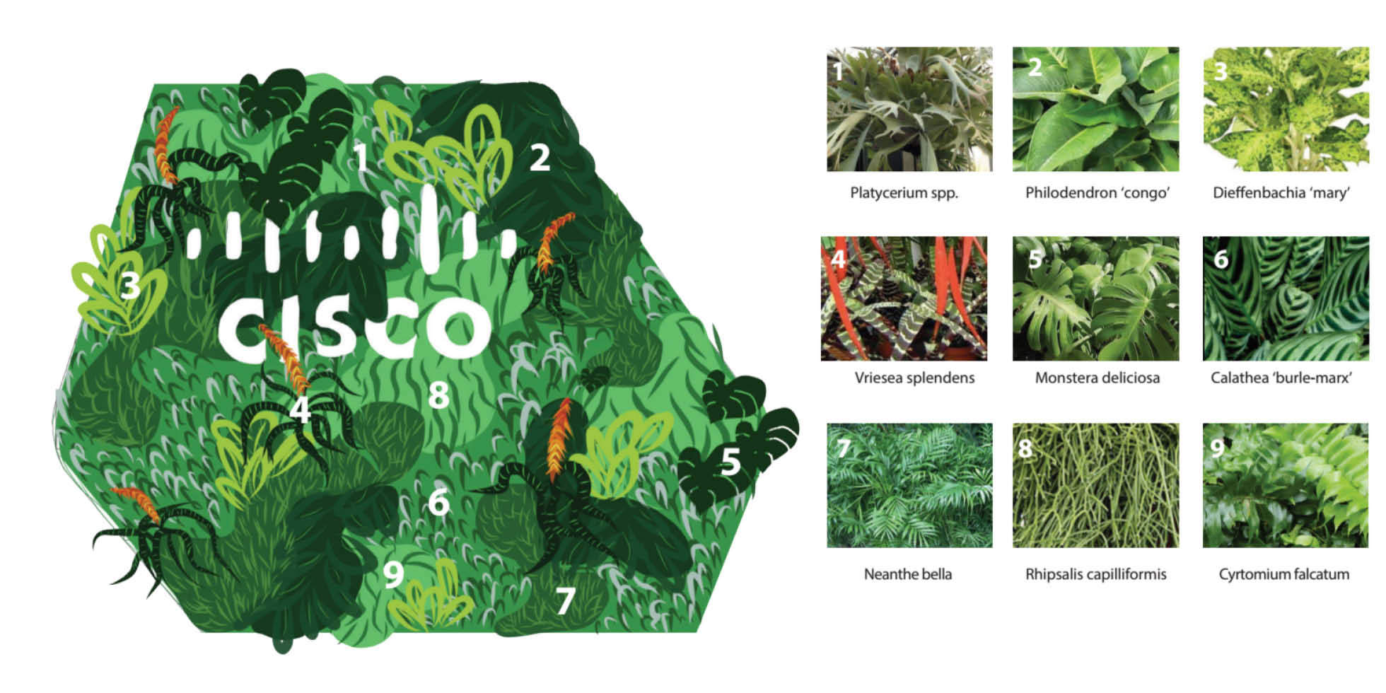 Cisco Living Wall by Habitat Horticulture - View 3