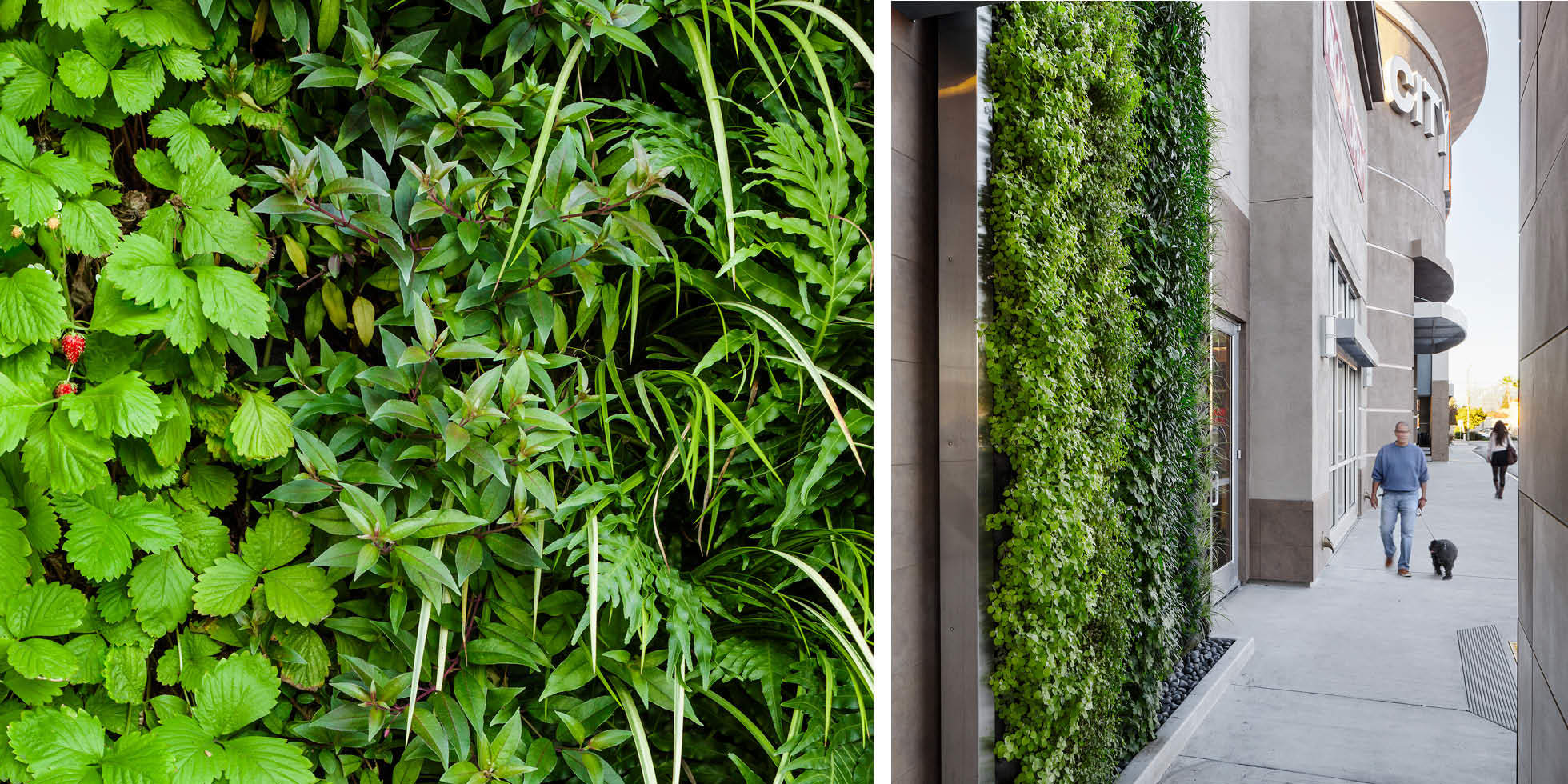 City Sports Club Living Wall by Habitat Horticulture - View 2