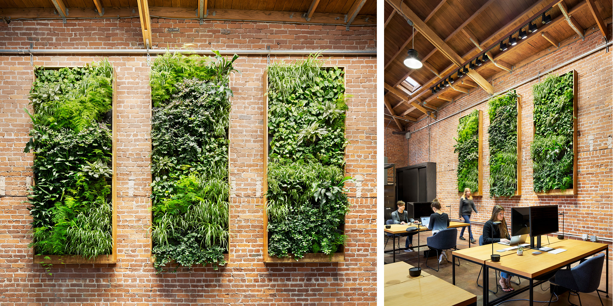 Combine Studios Living Wall by Habitat Horticulture - View 2