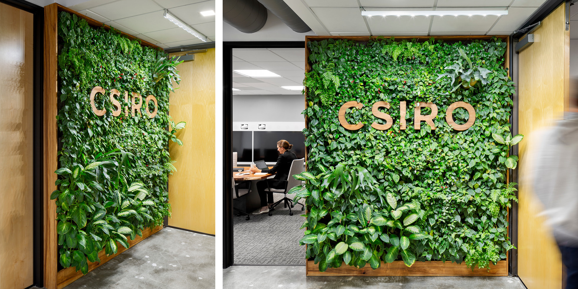 CSIRO Living Wall by Habitat Horticulture - View 2