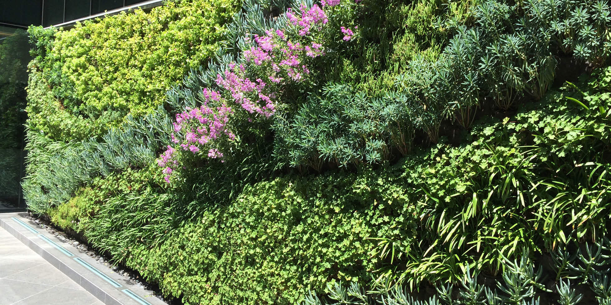 Kennedy Wilson Living Wall by Habitat Horticulture - View 1