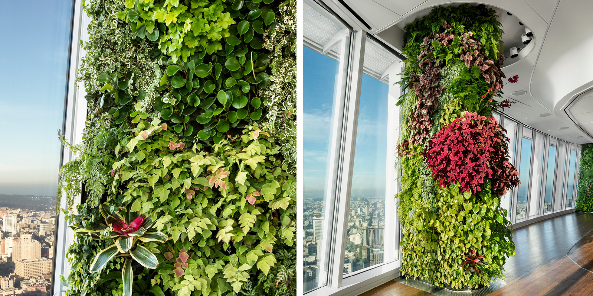 Salesforce Tower  Living Wall by Habitat Horticulture - View 2