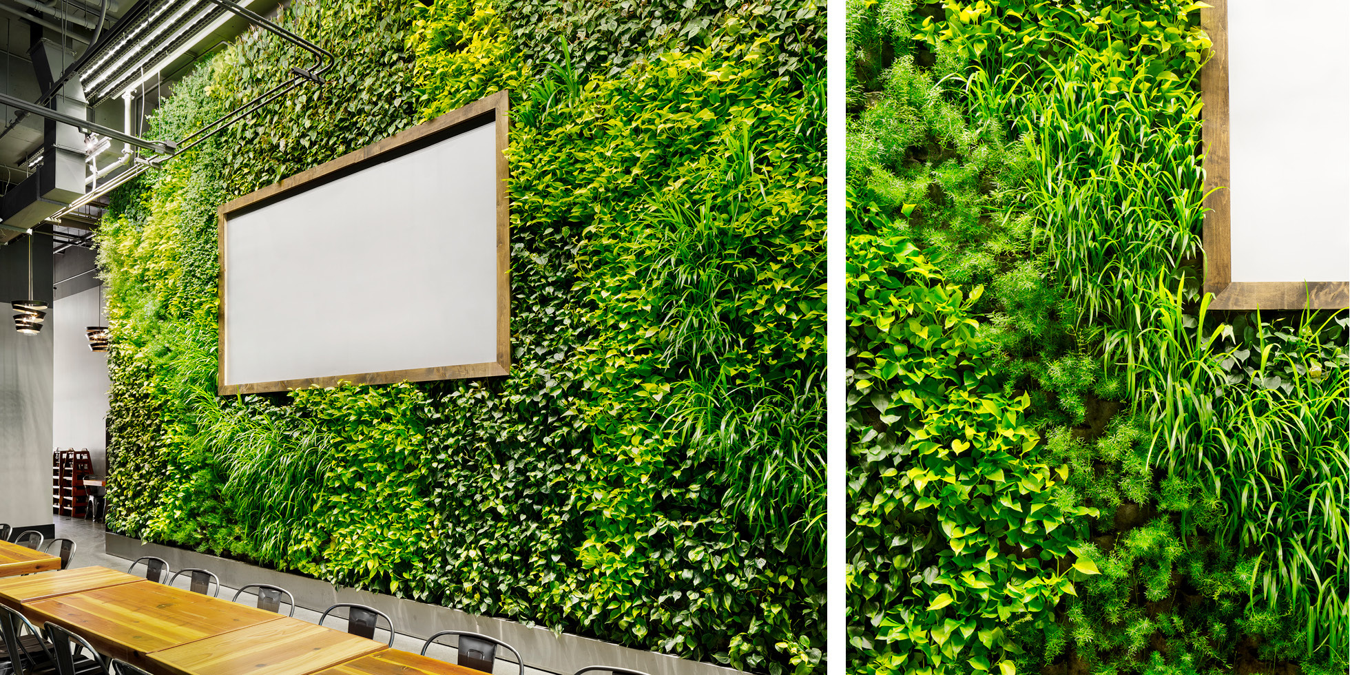 Steins Beer Garden Living Wall by Habitat Horticulture - View 3