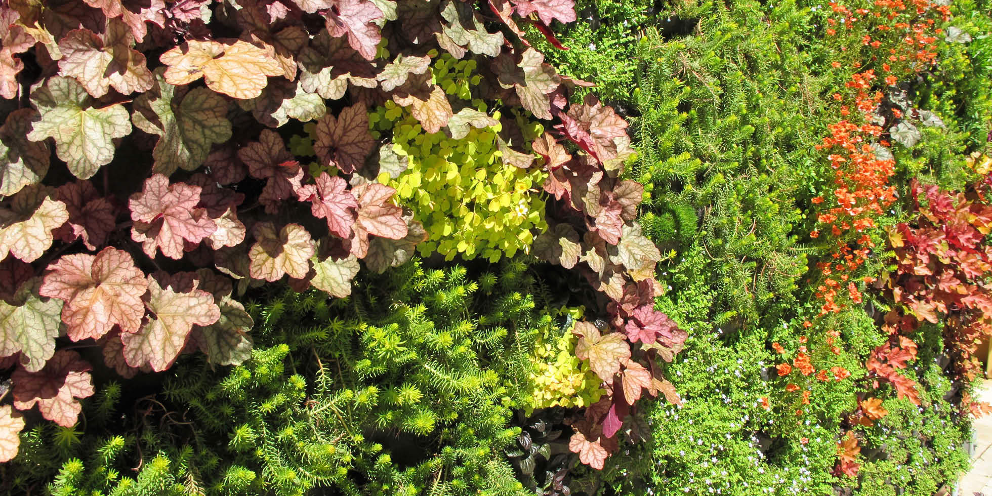 Tiburon Estate Living Wall by Habitat Horticulture - View 2