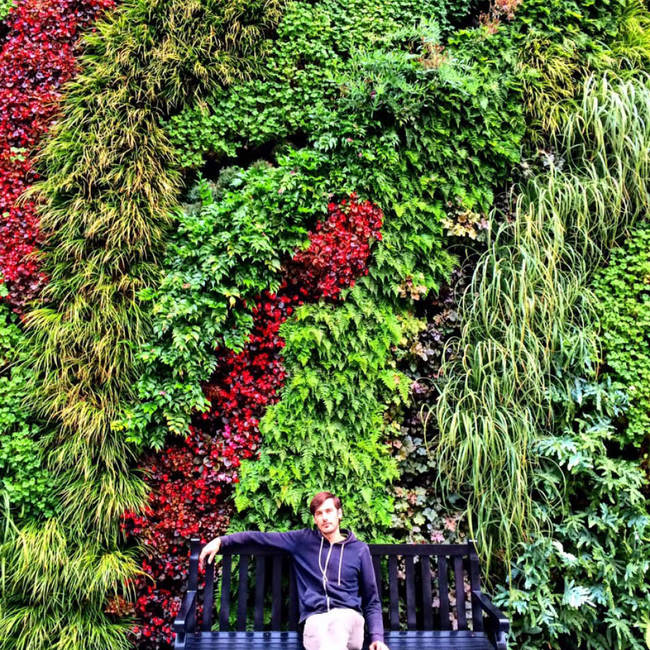 Westfield century city living wall9